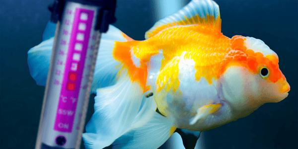A guide to aquarium heaters