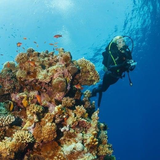 aqaba-scuba-diving
