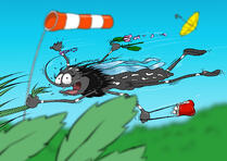 Tiger mosquito marcy doesn't like wind! World wind day