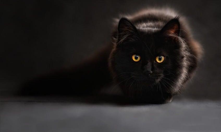 black-cat-960x576