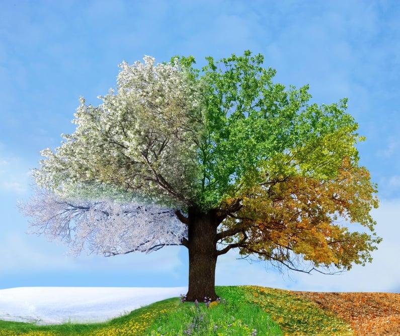 Five Common Types of Seasonality