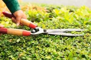 Trim shrubs and trees, 8 Easy Yard Care Tips to Help Sell Your Home