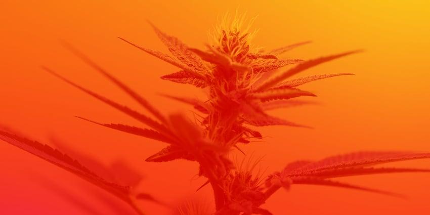 Cannabis social banners347_CannabisBlog