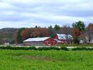Picadilly-farm.jpg