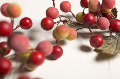 Something Festive - Cranberry Processing