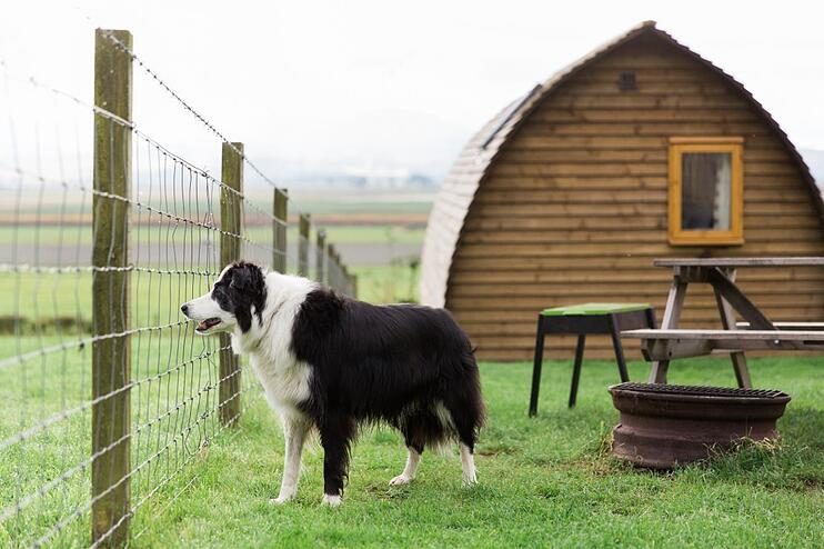 Camping With A Dog - Your Guide To Holidays With Pets - Main Image