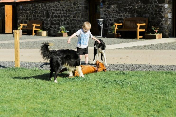 Dog Friendly Camping - Main Image