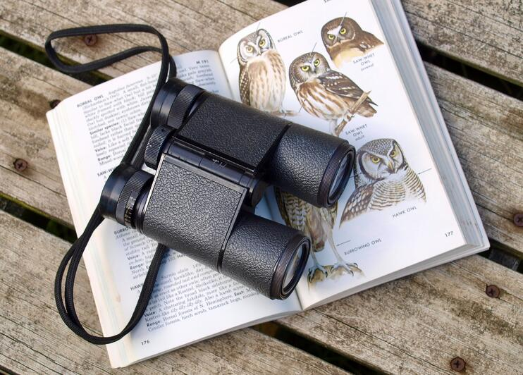 A Beginner's Guide to Birdwatching - Main Image