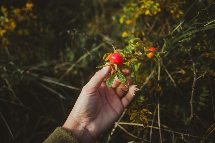 Your Guide To Fall Foraging In The UK - Main Image
