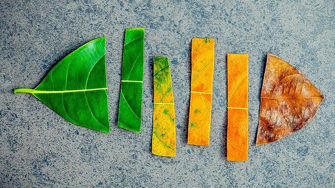 leaf-cycle-e1501524404830
