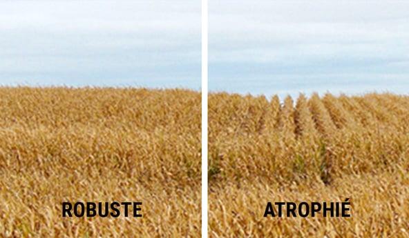 tassement du sol = récolte atrophiée