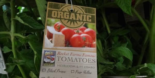 Rocket-Farms-Organic-Tomatooes