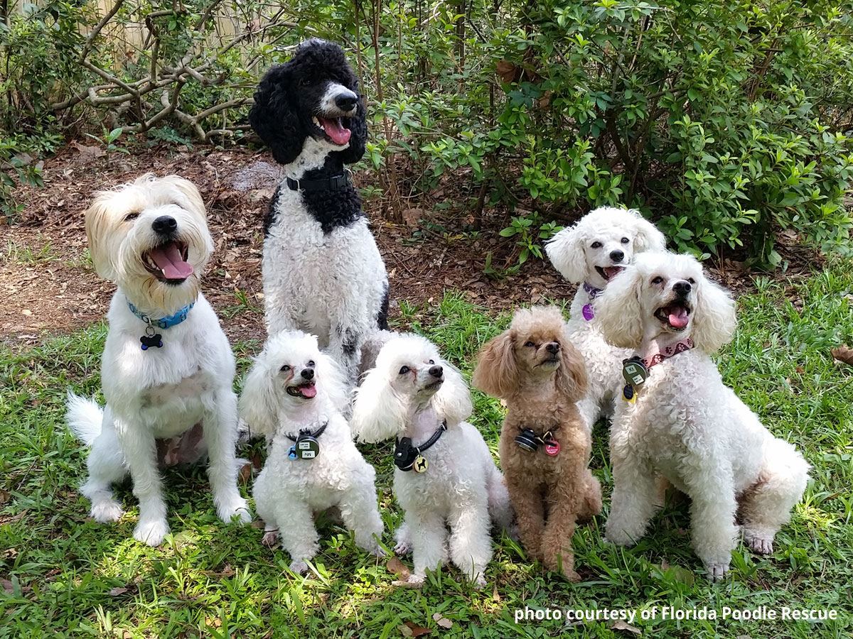Is There A Healthy Dog Food For Dogs With Contact Allergies?