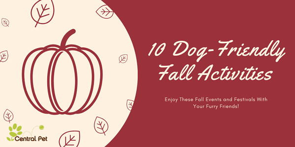 10 Fall Activities