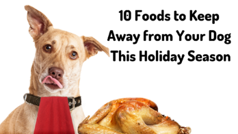 10 Foods to Keep Away from Your Dog This Holiday Season