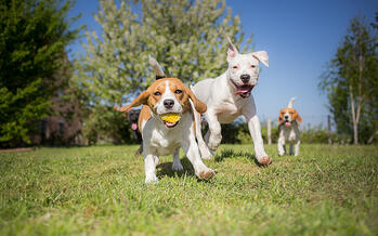3 Dangers at the Dog Park