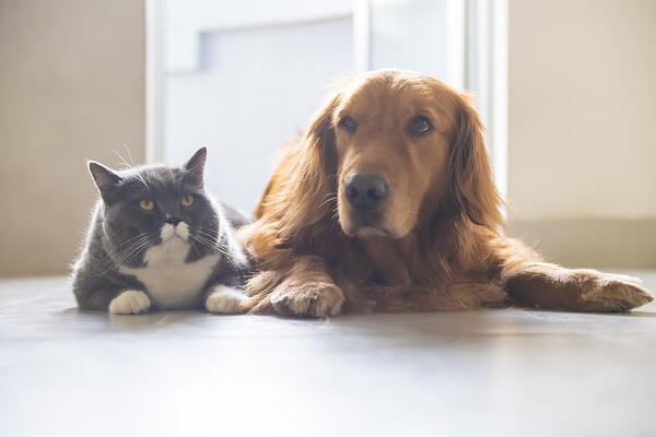 CBD-Cats-Dogs-Anxiety