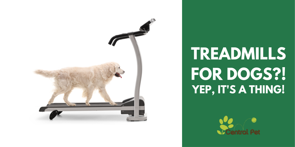 CP- Dog Treadmills
