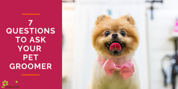 7 Questions to Ask Your Pet Groomer
