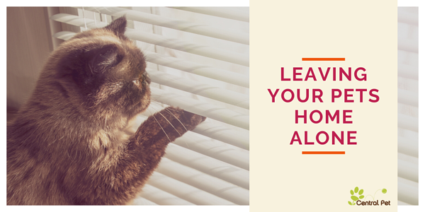 How long should you leave your pets home alone?