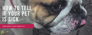 CP_ Pet Health