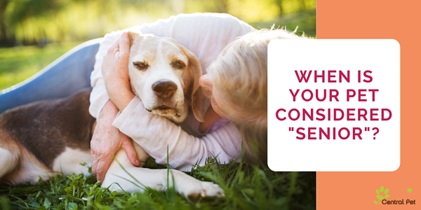When are pets considered senior?