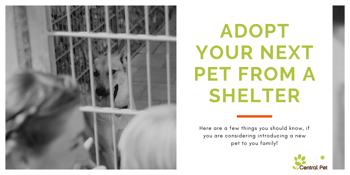 CentralPet-Pet_Adoption