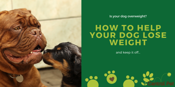 Is your dog overweight_