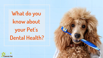 Oral Hygiene and the Health of Your Pet