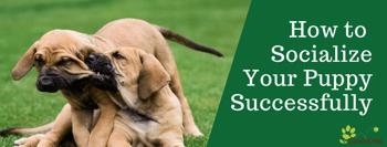 Socialize Your Puppy- Tucson