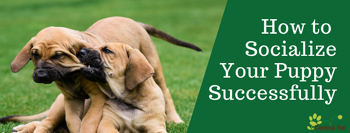 Socialize Your Puppy- Tucson
