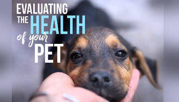 How to evaluate the health of your pet