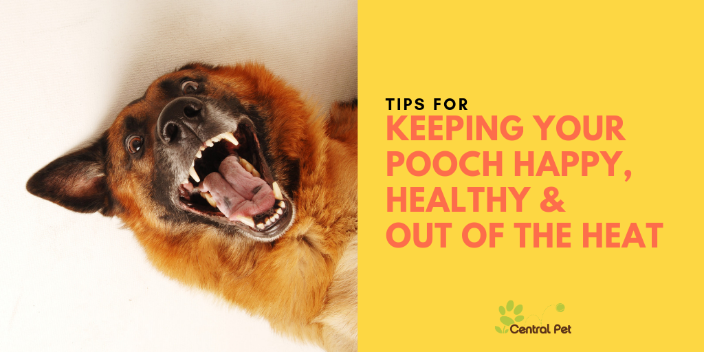 keeping your pooch happy, healthy & out of the heat