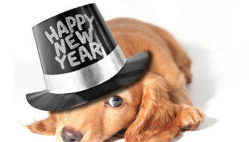 New Years Resolutions are Going to the Dogs?