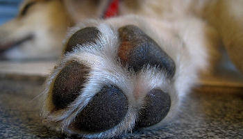 paw-waxing