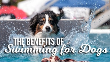 swimming-benefits-1