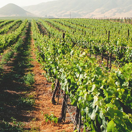 our-moscato_estate-grown
