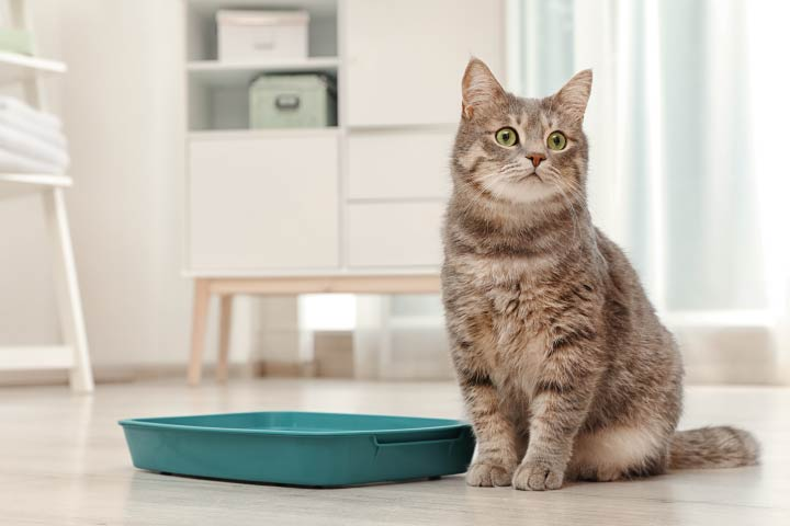 How Do Cats Know to Use the Litter Box?