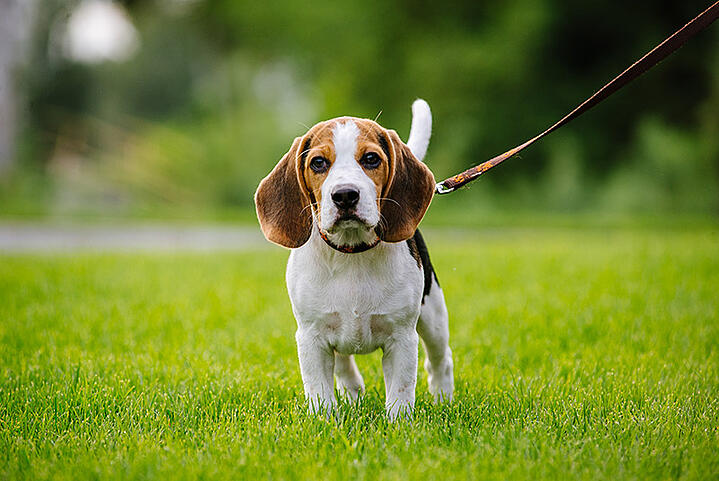 5 Highly Successful Health Tips for Basic Pet Care