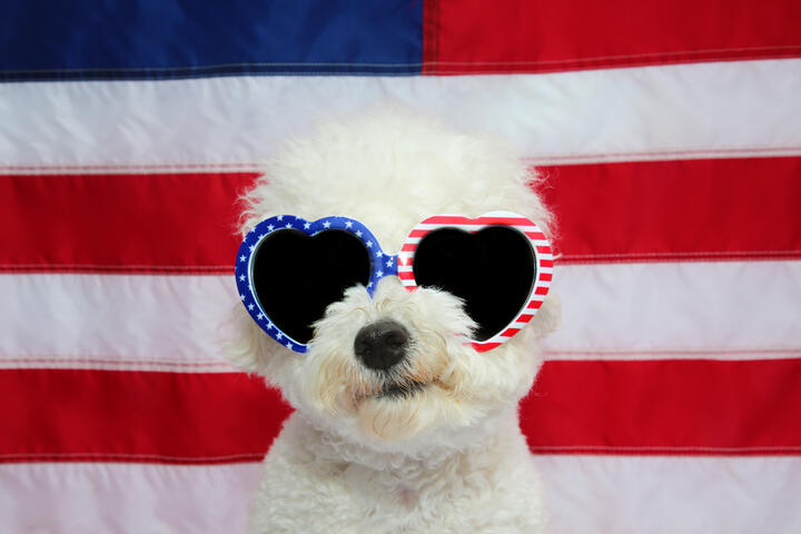 Star-Spangled Pet Safety