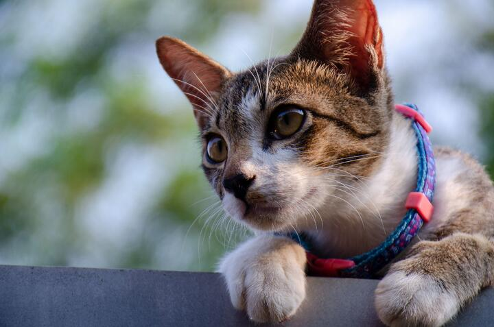 Cats 101 : Helpful Tips and Facts for Cat Lovers