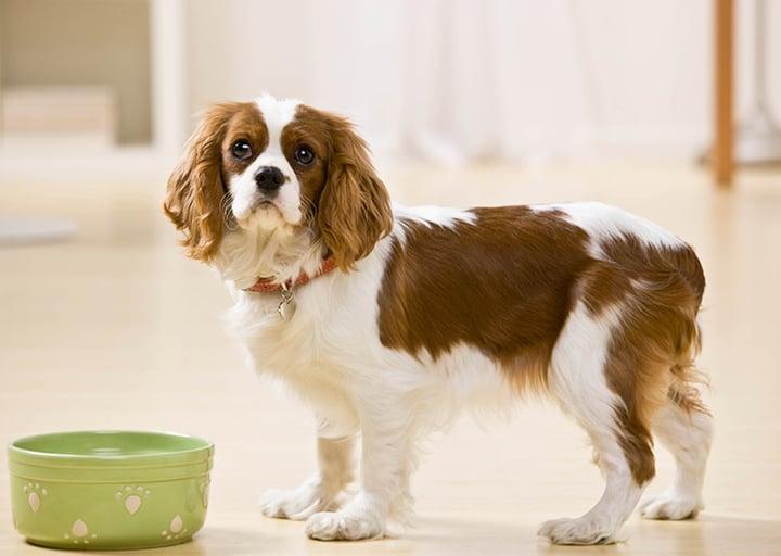 Pet Poison Prevention