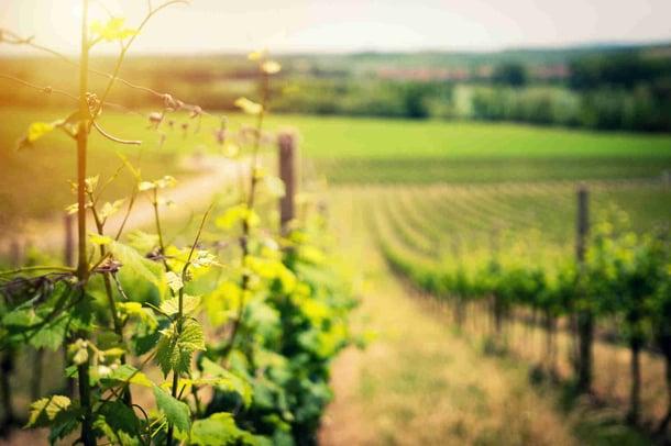 Vers une meilleure gestion des travaux viticoles