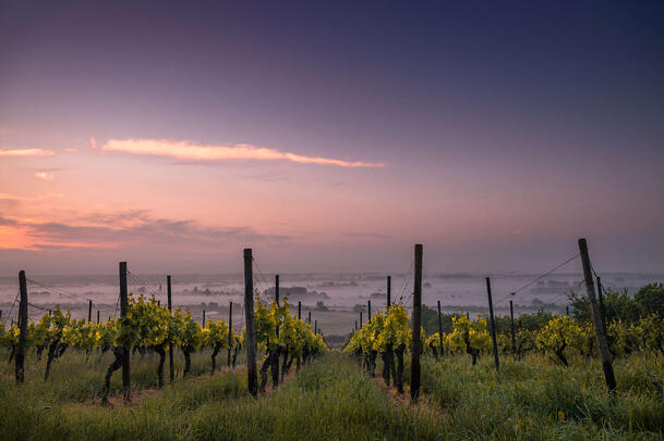 le secteur viticole se digitalise petit à petit