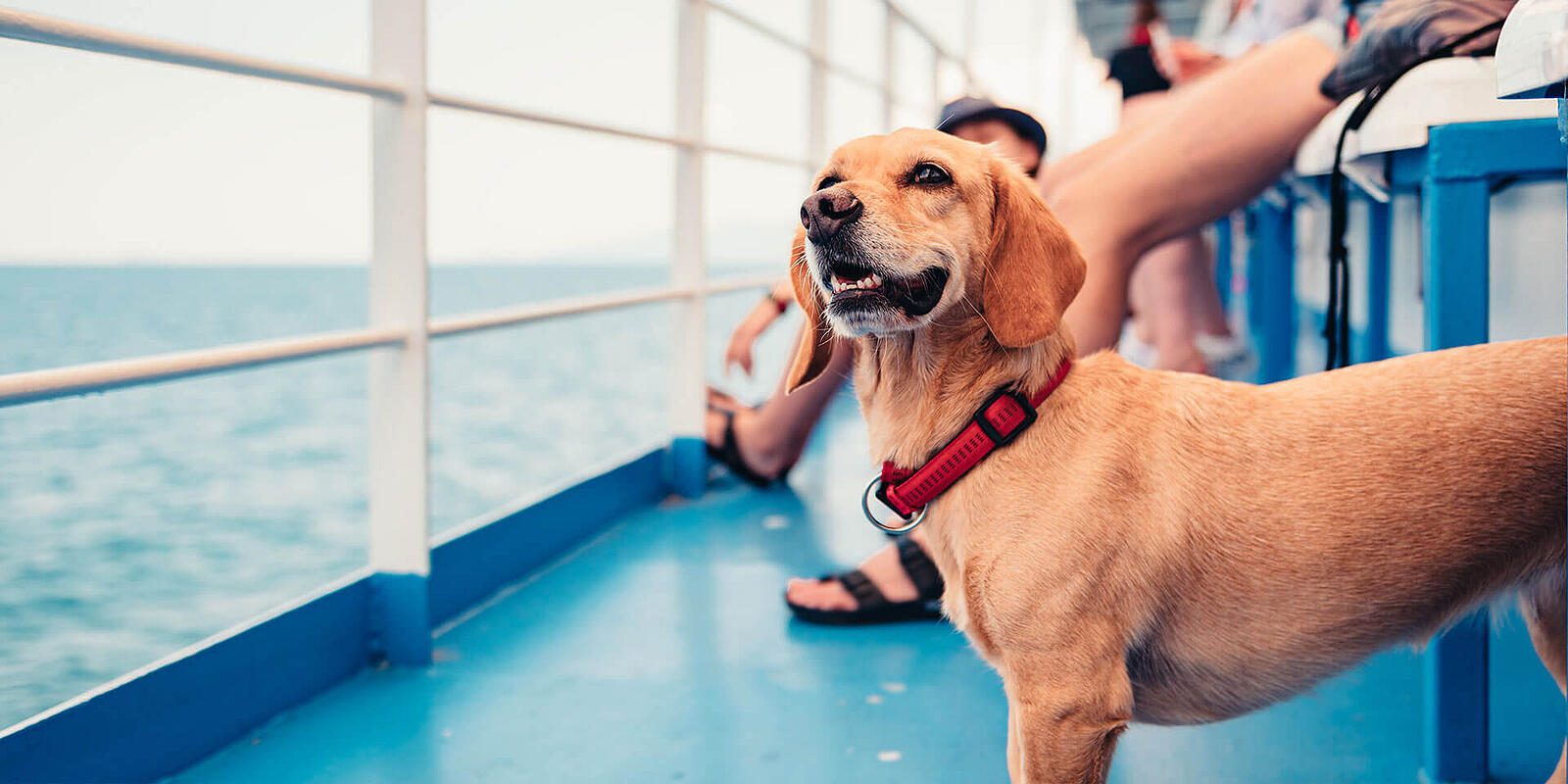 Dog on Board, or how cruise and ferry lines can add value with pre-booked services