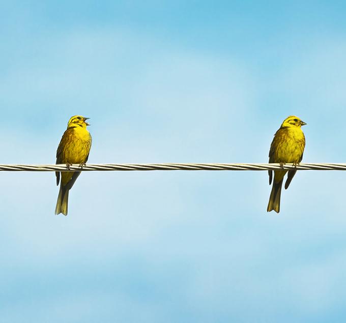 Two-Birds-Key-Employee-Motivator.jpg
