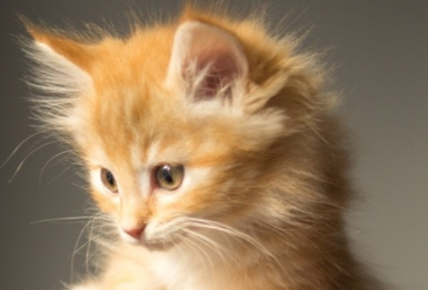 animal-cute-kitten-cat-large-968544-edited.jpg
