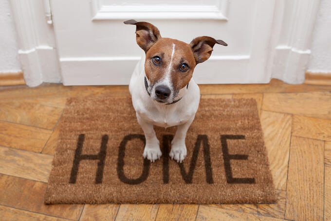 dog sitting on a welcome home mat