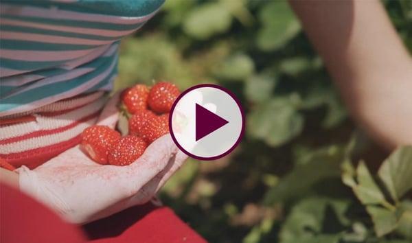 La fraise par Les vergers Boiron