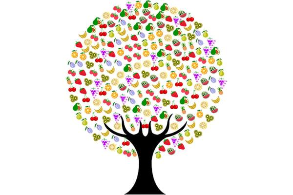 Les différentes formes de fruits-3